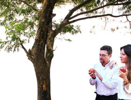 Fortalezas, performance, well-being at work y el pez que quería trepar al árbol.